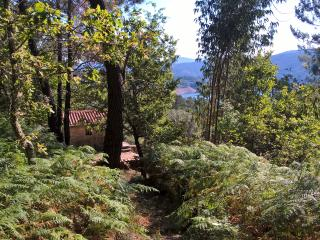 Ecohouse in the forest with a view - Pedrogao Grande vacation rentals