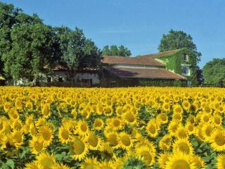 maison de campagne près de Carcassonne et Limoux - La Courtete vacation rentals