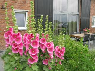 Lovely Barn with Internet Access and Balcony - Schoondijke vacation rentals