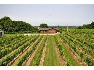 Beamsville Bench Vineyard Cottage on Wine Route - Beamsville vacation rentals