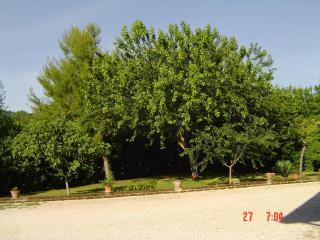 villa in campagna per vacanze al mare - Potenza Picena vacation rentals