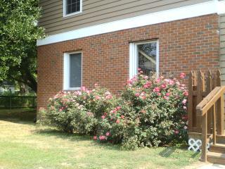 Artist Home/studio  1 block from Chesapeake Bay - Deale vacation rentals