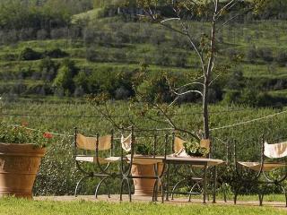 MAGNOLIA e CAMELIA - Vicchio vacation rentals