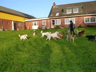 Urlaub mit Hund an der Nordsee - Dagebull vacation rentals