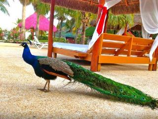 VIP Accommodations in the Grand Oasis Pyramid - Cancun vacation rentals