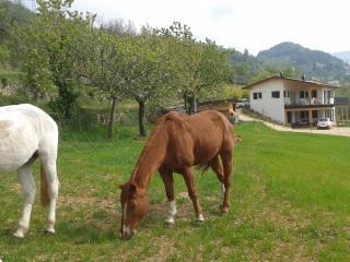 Casa eco nel paradiso verde fra vigne e oliveti - Pesina vacation rentals