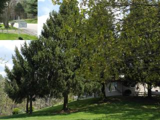 Whip-poor-will Retreat of Cabins in Hocking - Laurelville vacation rentals