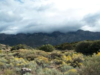 5 BDR, Gorgeous Adobe, Spectacular Setting w/Views - Albuquerque vacation rentals