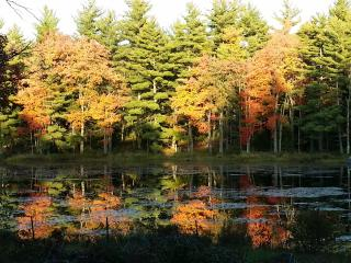 Pet-friendly private, peaceful, pond-front home - Fitzwilliam vacation rentals