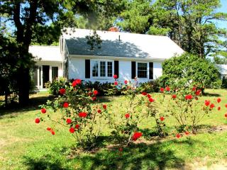 East Orleans Vacation Rental (80840) - East Orleans vacation rentals