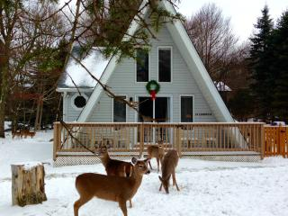 Pocono Dwarf Cottage - Albrightsville vacation rentals