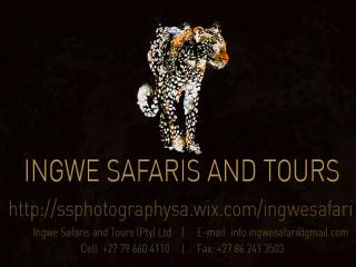 Ingwe Safaris and Tours - Sandton vacation rentals
