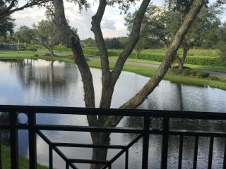 One Room Tampa  Saddlebrook  Resort  Condo - Wesley Chapel vacation rentals