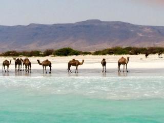 Luxury Beach Front Villas - Salalah vacation rentals