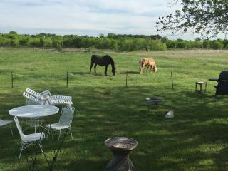 Bridlespur Animal Rescue Ranch - Georgetown vacation rentals