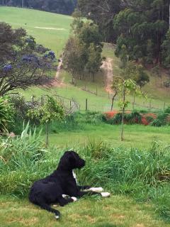 A Cozy Cabin in the Clouds - Gawler, Tasmania - Ulverstone vacation rentals