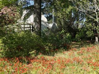 Pioneer Cottage circa 1884 - Blackheath vacation rentals