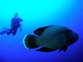 Home Holidays & Scuba Diving - Dahab vacation rentals