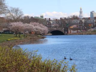 Sunny quiet comfortable room near Harvard campus - Cambridge vacation rentals