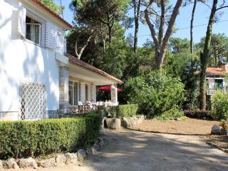 Colares Pine Tree - Colares vacation rentals