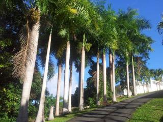 El Yunque Private with Pool - Hacienda las Palmas - Rio Grande vacation rentals