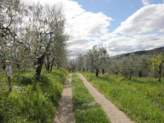 Countryhouse PoggioOliva Firenze camera standard - Fiesole vacation rentals