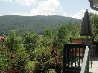 Mountain View Apartment with swim spa. Pet friendl - Hendersonville vacation rentals