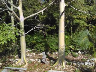 Los Jaguares Glamping: Hut Zapote - Tulum vacation rentals