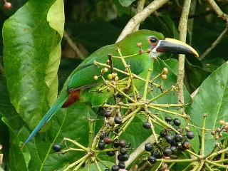 Eco Tourism - Birdwatching - nature - - Manizales vacation rentals