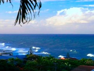 Pet Friendly Holiday Accommodation Coolum Beach - Coolum Beach vacation rentals