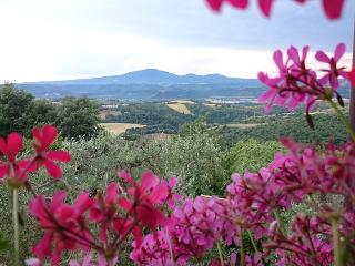 B&B in ancient stone farmhouse with pool in Umbria - Umbria vacation rentals