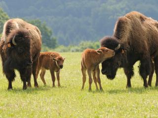 Ranch des Bisons _ Besoin de vous évadez ! - Petit-Rederching vacation rentals