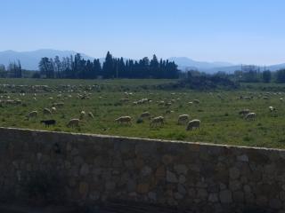 Mas Granata - 700 m du centre de Perpignan - Perpignan vacation rentals