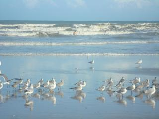 SEABREEZE 2BD CONDO A FEW STEPS TO THE BEACH - Cocoa Beach vacation rentals