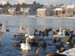 Central Pond side Apartment - Reykjavik vacation rentals