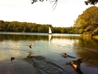 RELAXATION ON THE PEACEFUL BEAUTIFUL LAKE - East Falmouth vacation rentals