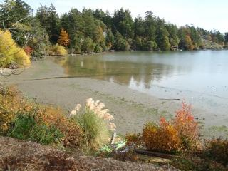 Home on the Bay - Victoria vacation rentals