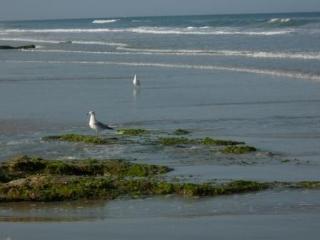 Great Ocean Front Condo - Dramatic Ocean Views! - Palm Coast vacation rentals