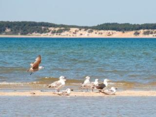 Lieutenant Island Home in Audubon Preserve - Wellfleet vacation rentals