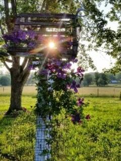 Welcome! Looks like a beautiful sunset coming! - Cottage in the Country NEAR NASHVILLE! Retreat! - Kingston Springs - rentals