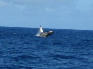 Ac Condo, Nothing But Ocean and Turtles - Poipu vacation rentals