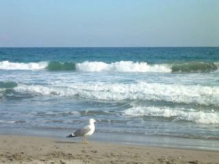 A 50m de la plage, beau duplex, vue panoramique - Villers-sur-Mer vacation rentals