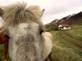 Beautiful 1 bedroom House in Faskrudsfjordur - Faskrudsfjordur vacation rentals