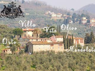 Cozy 2 bedroom Apartment in San Gennaro Collodi - San Gennaro Collodi vacation rentals