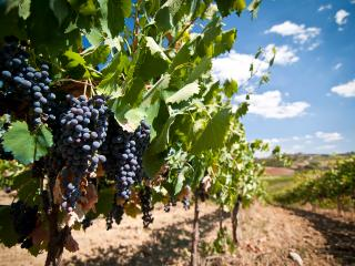 Cetine Vecchie - Winery - Torrita di Siena vacation rentals