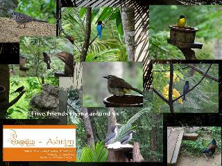 Ashram Sri Lanka Meditation and Yoga retreat Center in the Jungle - Hambantota vacation rentals