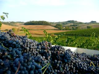 Cetine Vecchie - Stable - Torrita di Siena vacation rentals