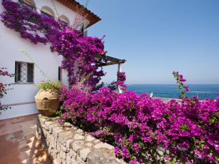 Charming Apartment near Sorrento - Alice - Massa Lubrense vacation rentals