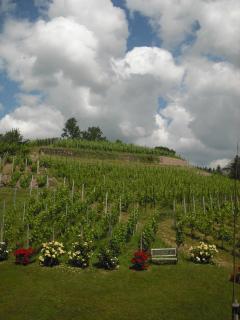 Weingut Mariaberg-Marias Traum - Meissen vacation rentals
