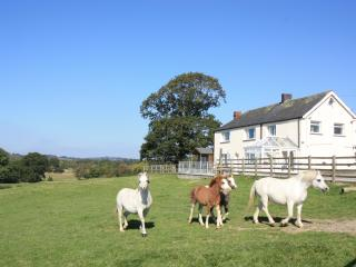 Secluded Cottage in the heart of Welsh Cob Country - Llanddewi Brefi vacation rentals